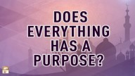 Does Everything Has A Purpose